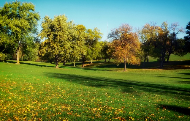 trees-grass-lawn-park2