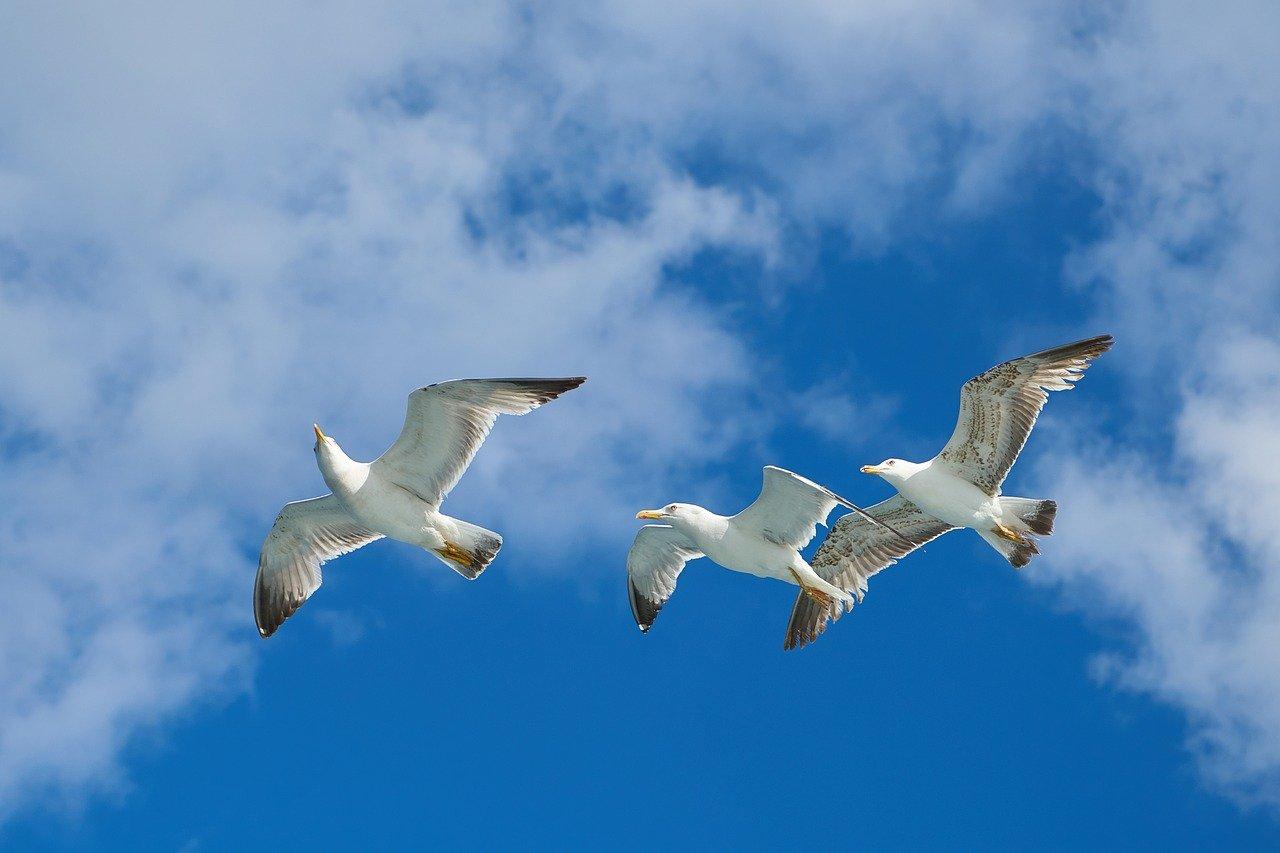 seagull-2313922_1280